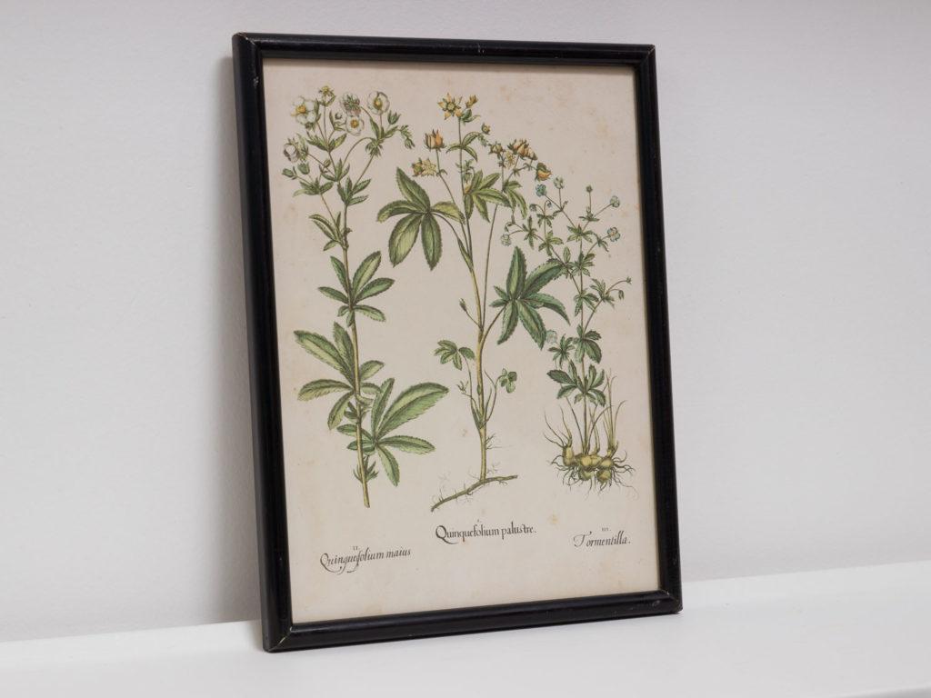 Reproduction botanique