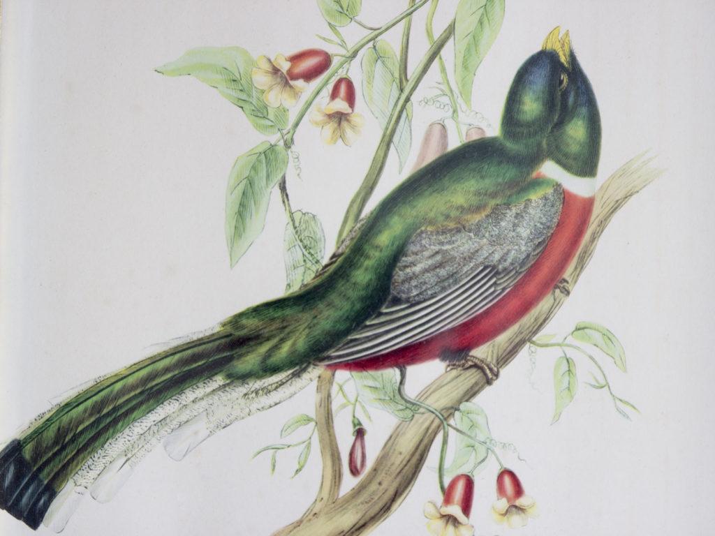 Cadre ornithologique John Gould