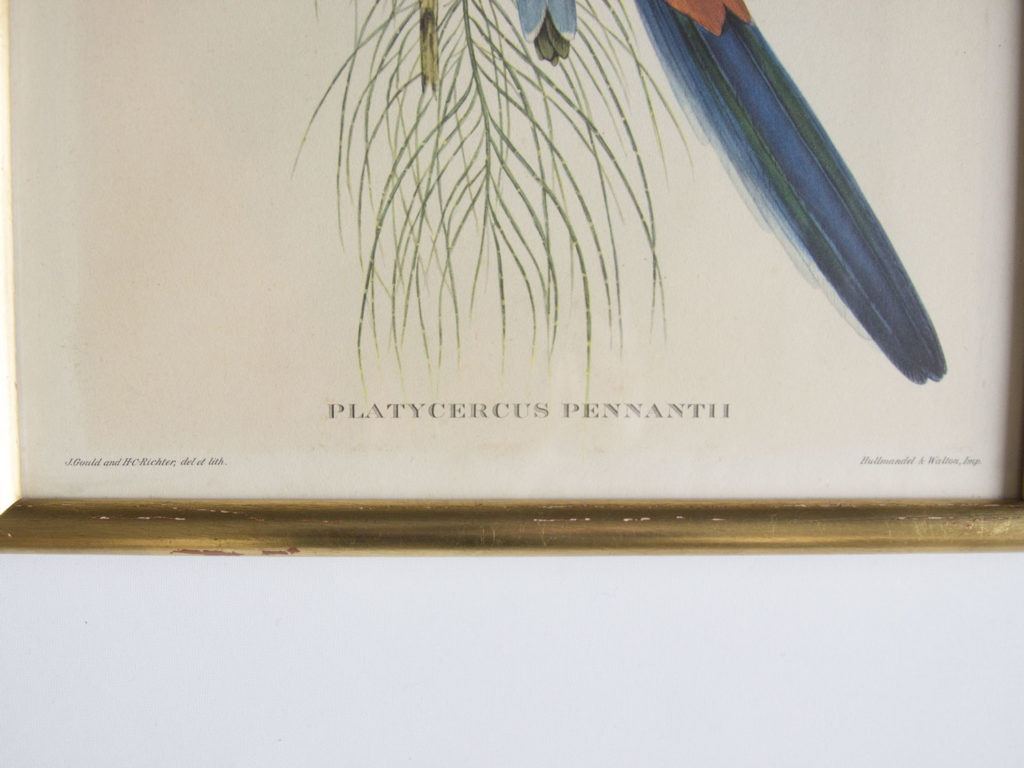 Cadre oiseaux John Gould -Platycercus Pennantii-